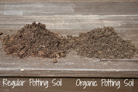 the-planting-experiment-organic-vs-non-organic-soil