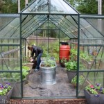 Greenhouse Gardening – Planting Heirloom Tomatoes