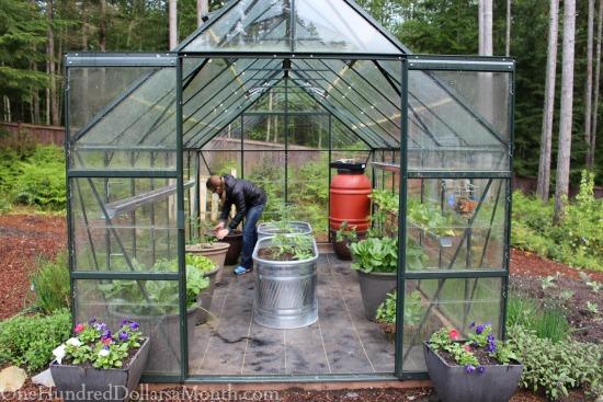 magnum glass greenhouse garden