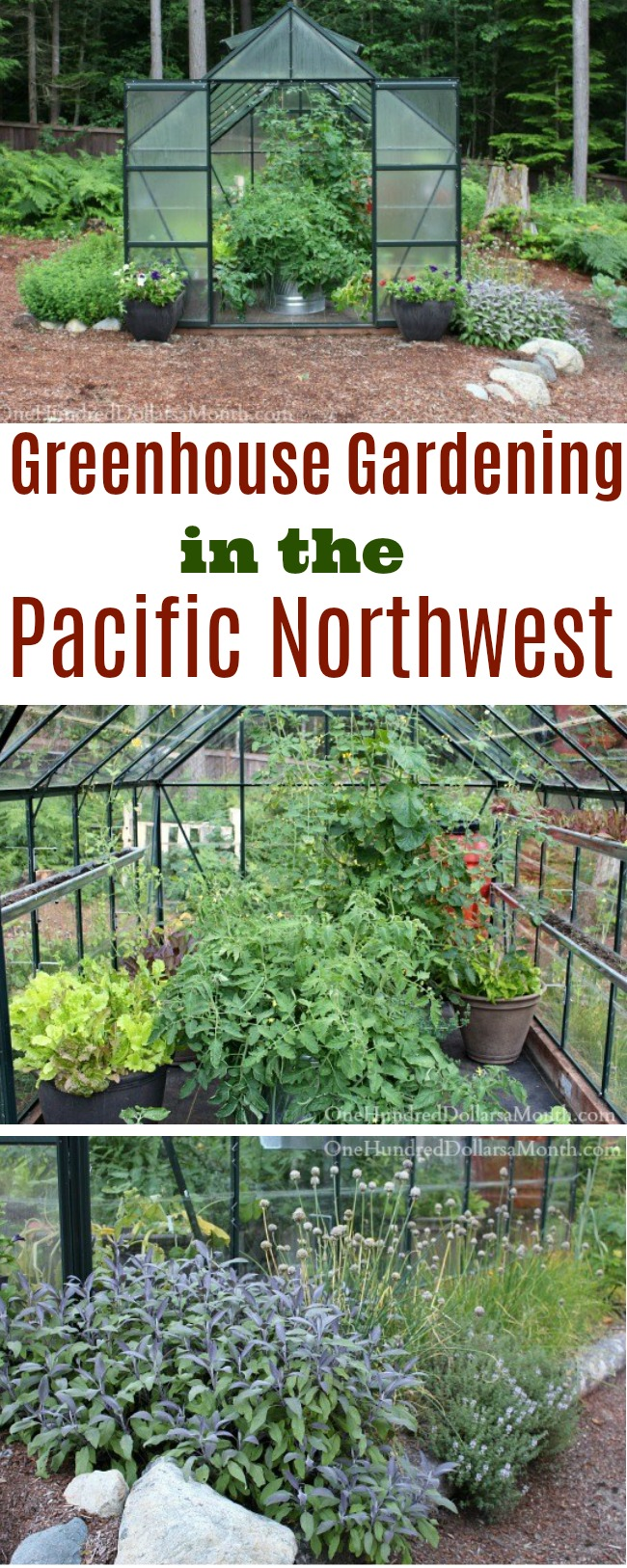 Daniels Pacific NW Garden: May 2014