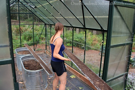 growing lettuce in greenhouse gutters