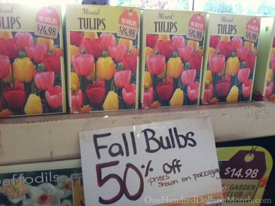 tulip bulbs on sale