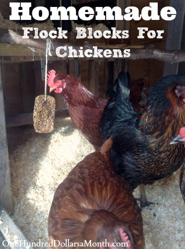 homemade-flock-blocks-for-chickens