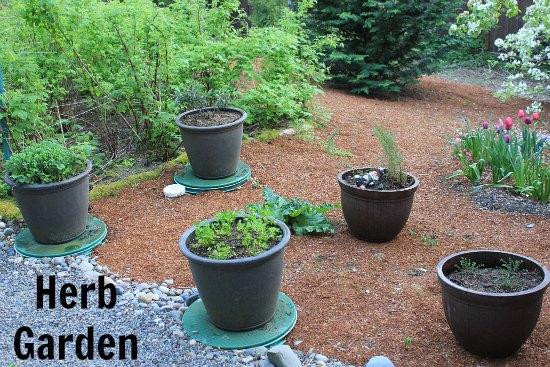 Container-Herb-Garden-