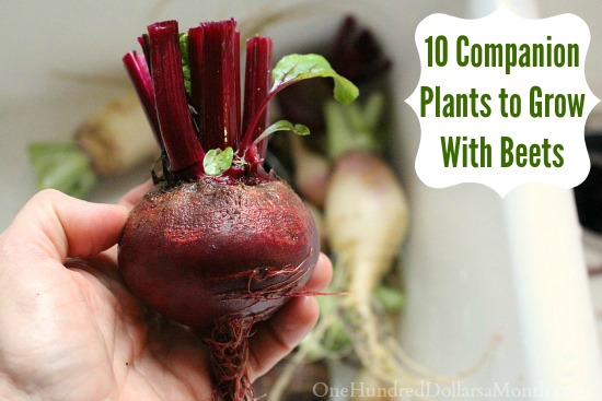 10 Companion Plants to Grow With Beets