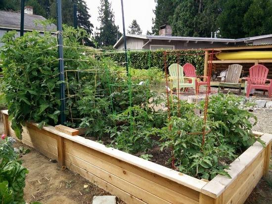 cedar garden boxes