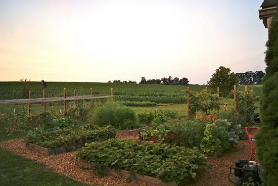 rasied-garden-bed1