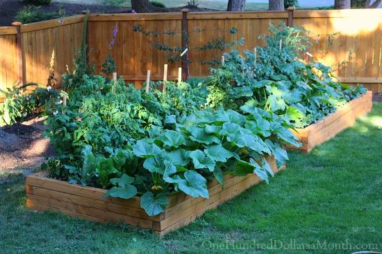 vegetabale garden boxes