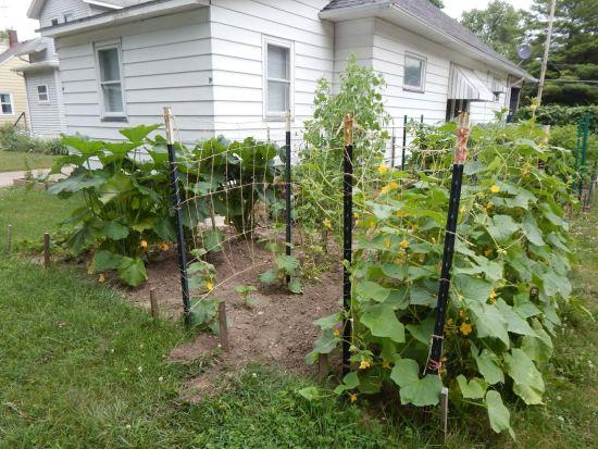 Tammy garden pictures5