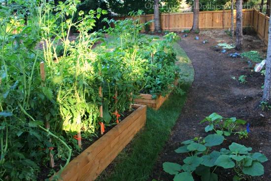 edged garden path