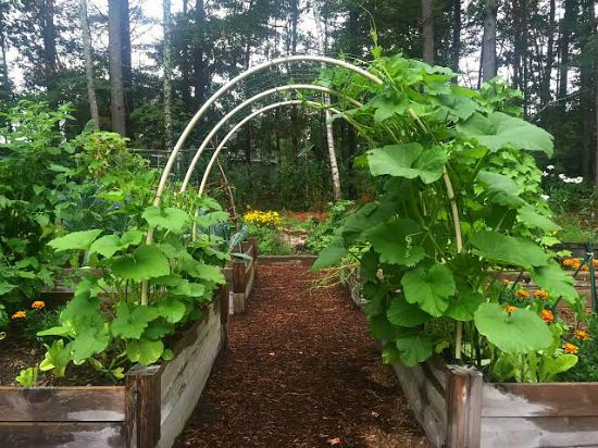 squash trellis garden