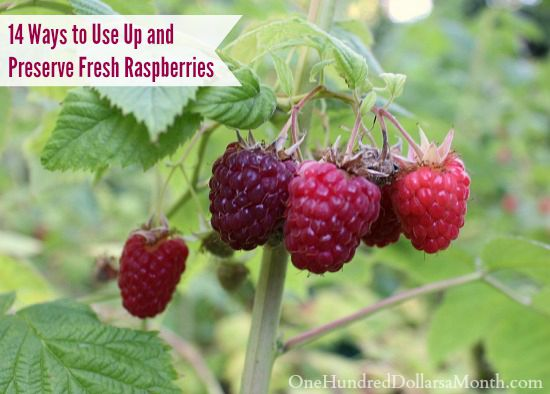 14 Ways to Use Up and Preserve Fresh Raspberries