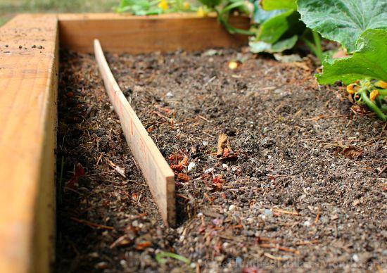 planting seeds with ruler yardstick