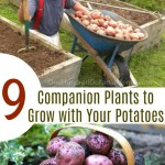 9 Companion Plants to Grow with Your Potatoes