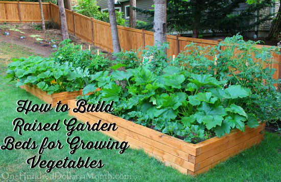 How to Build Raised Garden Beds for Growing Vegetables