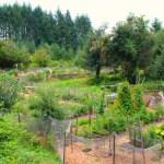 Wilkinson Farm Community Garden in Gig Harbor, Washington