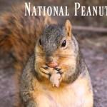 September 13th, 2016 – National Peanut Day