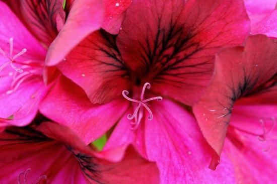 spring-flowers11