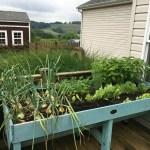 Mavis Mail – Tina From Western Pennsylvania Sends in Her Garden Photos