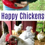 Gardening in New England – Plump Chickens, Gearing Up For Winter, and a Division of Chores