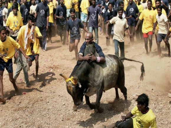 File picture of villagers in Tamil Nadu engaged in Jallikattu.