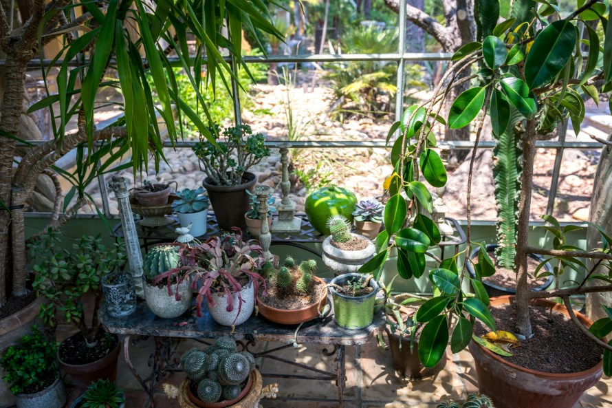 flowers and plants in green house at Villa Marie Saint Tropez