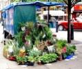 Broadwick Street Flower Stall