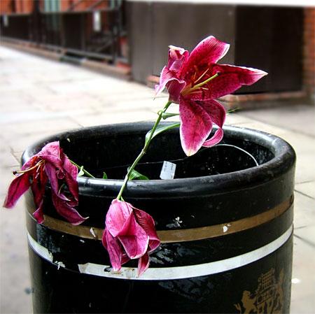 Abandoned Flowers