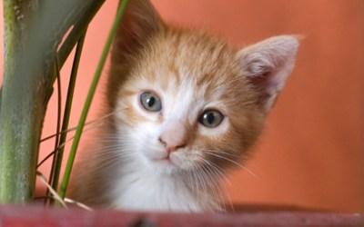CATS Fundraiser