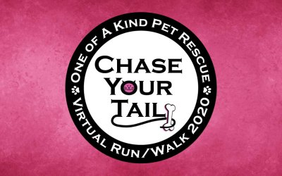 Chase Your Tail Virtual Run/Walk