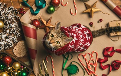 Christmas Trees and Cats