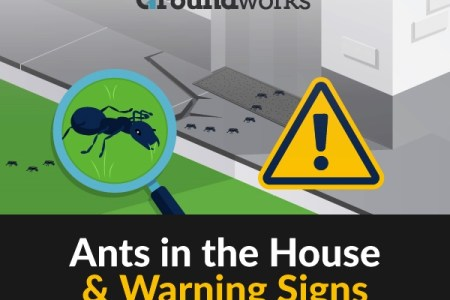 Groundworks Ants in the House