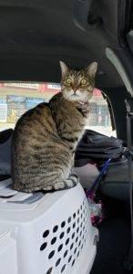 chalithor road trip con-topia oneshi press mascot