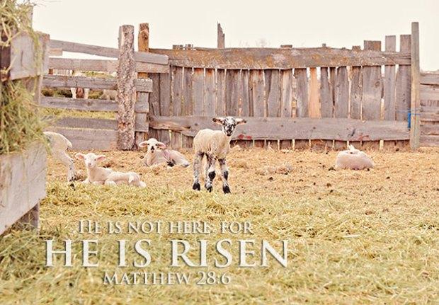 He is not here: for he is risen. Matthew 28:6