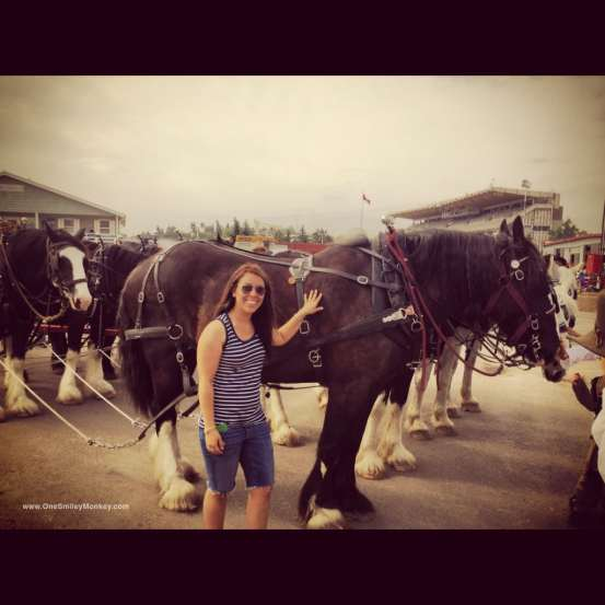Stampede 2012, horses