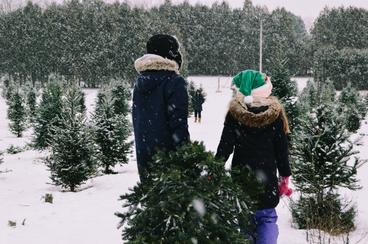 Let's bring the Christmas tree home!