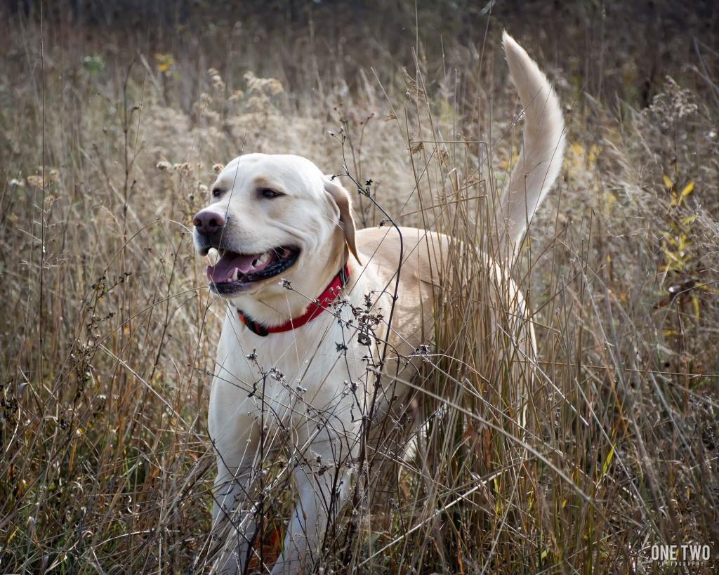 pet portrait dog in tall grass
