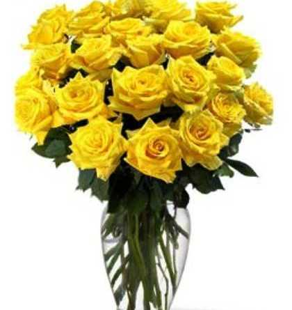 Flower of Friendship Day-The Yellow Rose