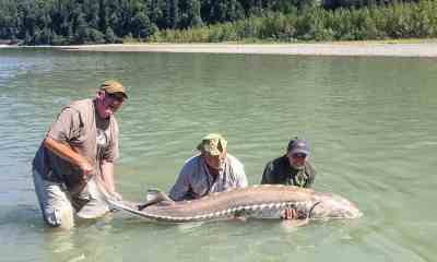 Bonus: White Sturgeon