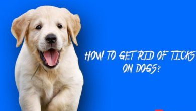 HOW-TO-GET-TICKS-ON-DOG