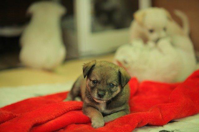 Adopting Stray Dog