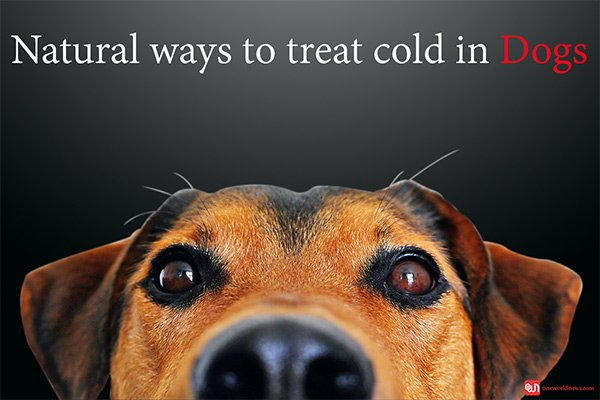 natural-ways-to-treat-cold-in-dogs