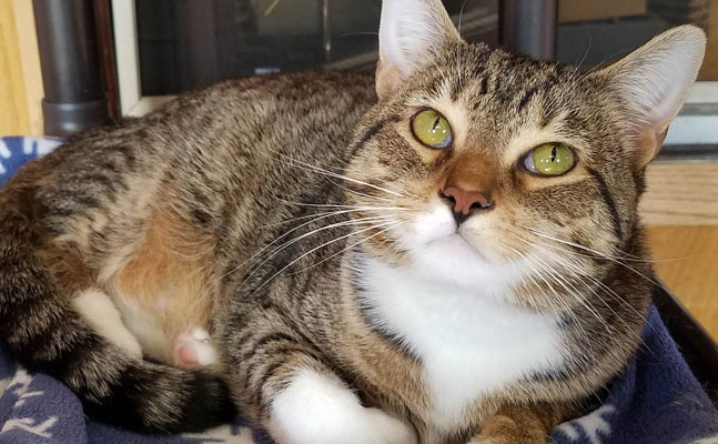 marshfield area pet shelter cat