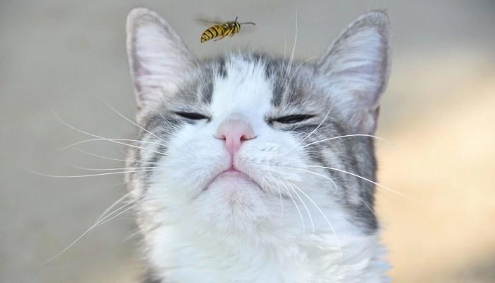 Tien manieren om wespen te vermijden