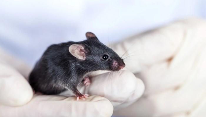 Onderzoek naar leefwijze muizen