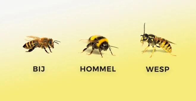 Wespen, bijen of hommels?