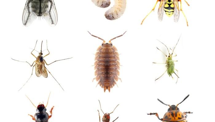 Toename insecten verwacht na koude start van het jaar