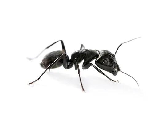 Mini-robots versus de echte mier