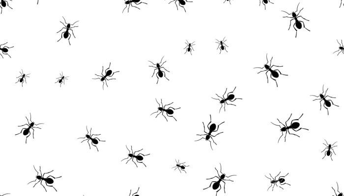 Mieren informeren elkaar door middel van geur