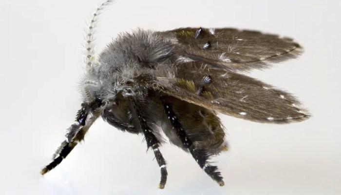 Motmuggen zelf bestrijden